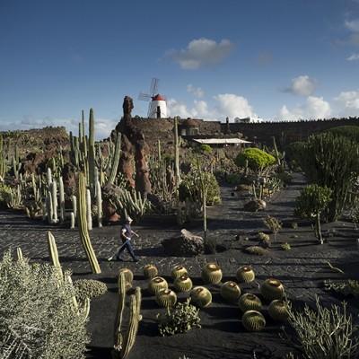 Lanzarote jard n de cactus fondazione benetton studi ricerche - Jardin de cactus madrid ...