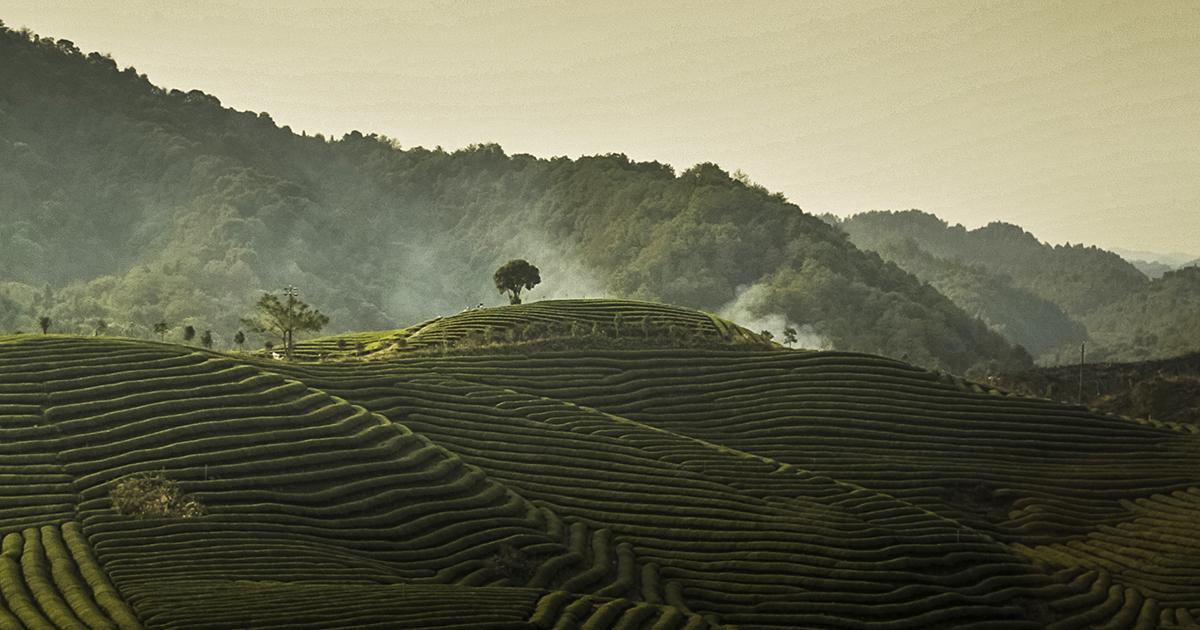 I giardini del tè di Dazhangshan Fondazione Benetton Studi